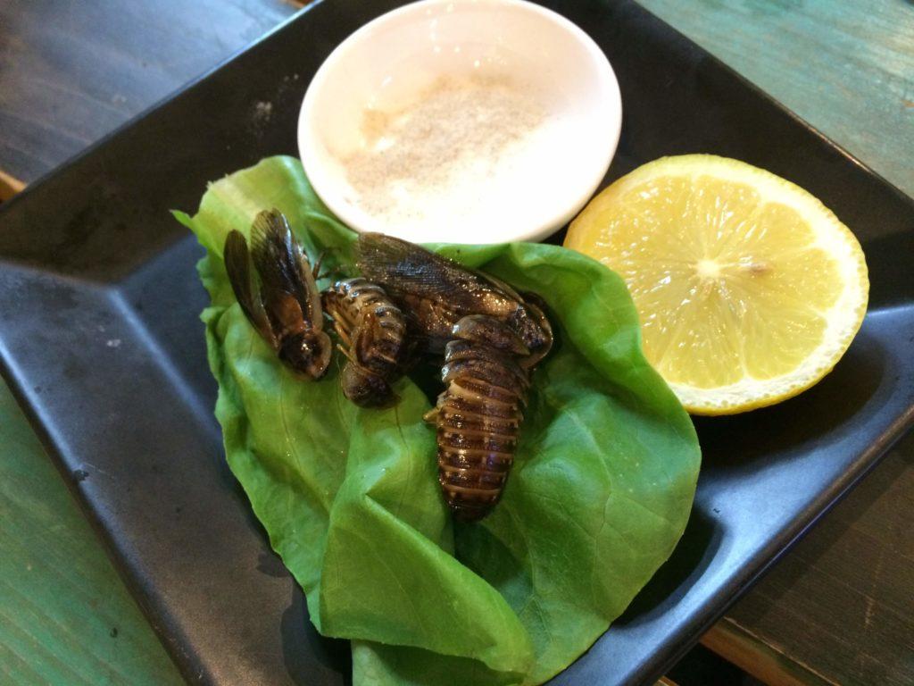 大阪<なんば>でゲテモノが食える。爬虫類カフェ「ROCK STAR」のゴキブリ