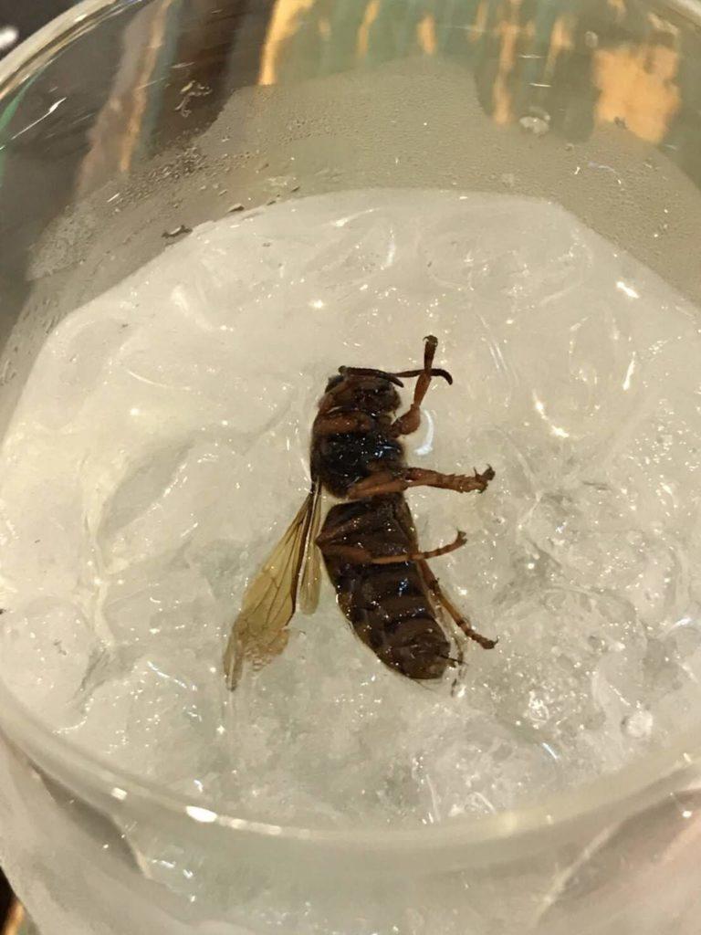 大阪<なんば>でゲテモノが食える。爬虫類カフェ「ROCK STAR」のオオスズメバチ酒